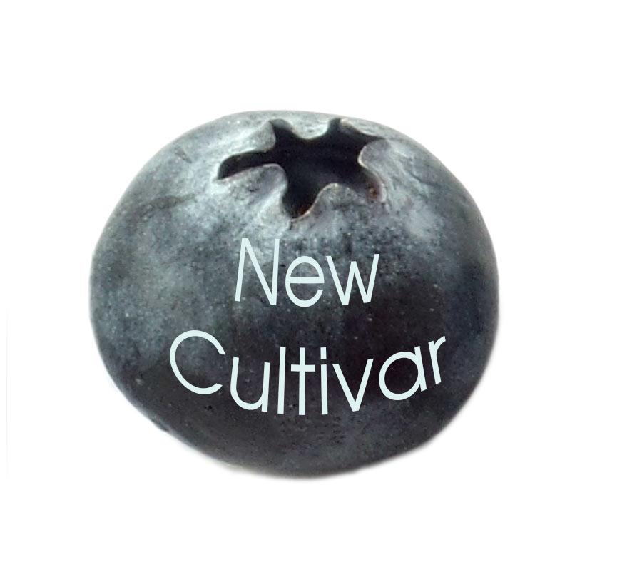 new cultivar